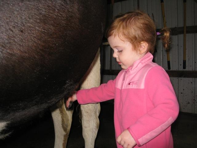 milkingcow